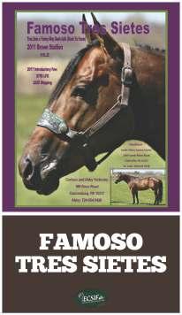 ECSIF_banners_2x3.5_last-stallions_FamosoTresSietes